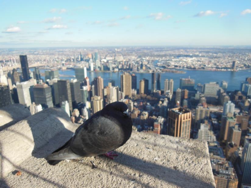New York idesember