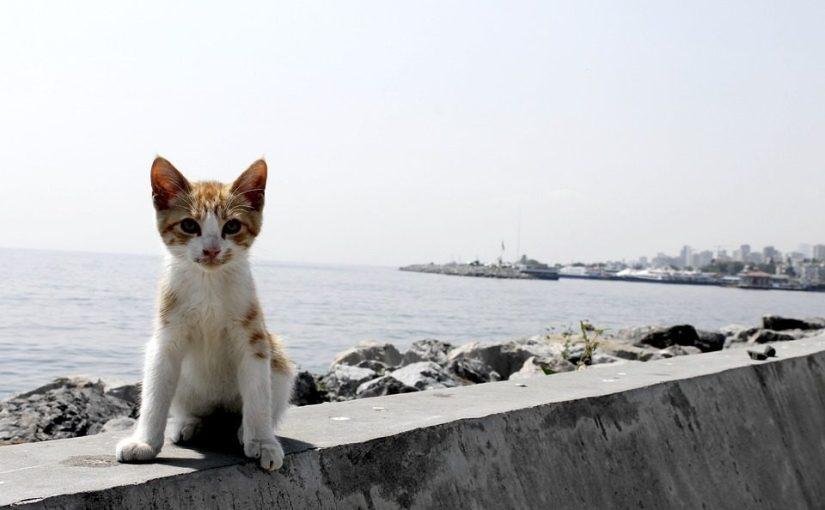 Kattebyen Istanbul